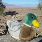 Mallard Duck Stuffed Animal