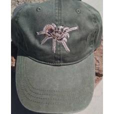 Arizona Blond or Desert Blond Tarantula