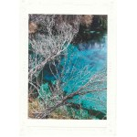 Crystal Spring Note Card