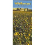 Wildflowers of Death Valley National Park