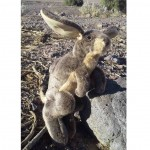 Jack rabbit Puppet