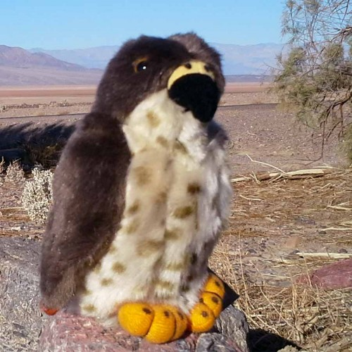 Red Tailed Hawk Stuffed Animal