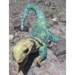 Collared Lizard Puppet
