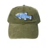 Amagosa Pupfish