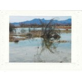 Marsh Reflection Note Card